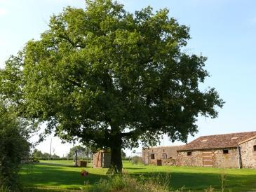 Gîte Rural La Trottière